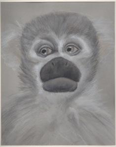 Primate 11