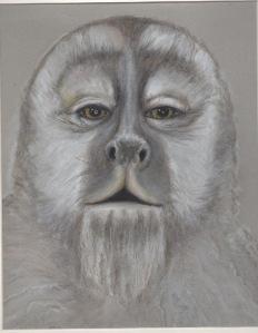 Primate 14