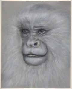 Primate 15