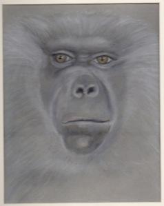 Primate 17