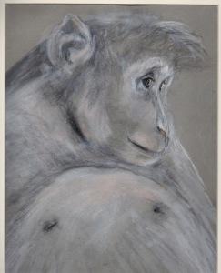 Primate 4