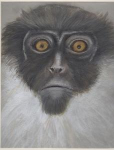 Primate 7
