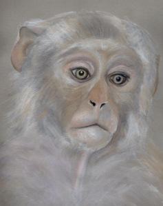 Primate 8