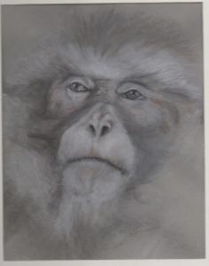 Primate 9